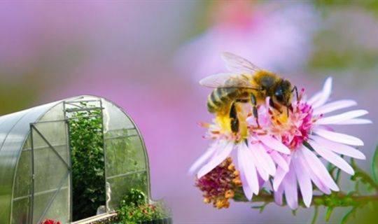 Как привлечь пчел в теплицу