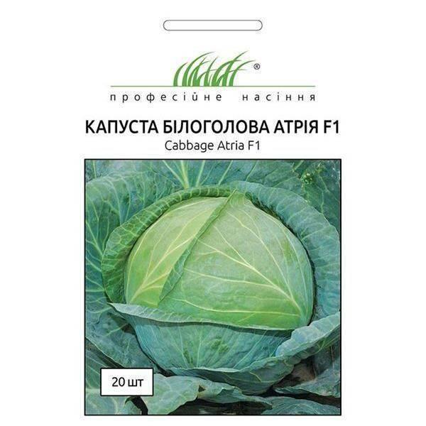 Капуста атрия: описание, плюсы и минусы сорта, основные правила выращивания и возможные проблемы