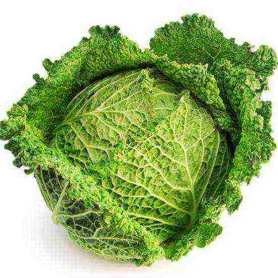 Всё о сорте капусты подарок: особенности выращивания и ухода, сбор и хранение урожая