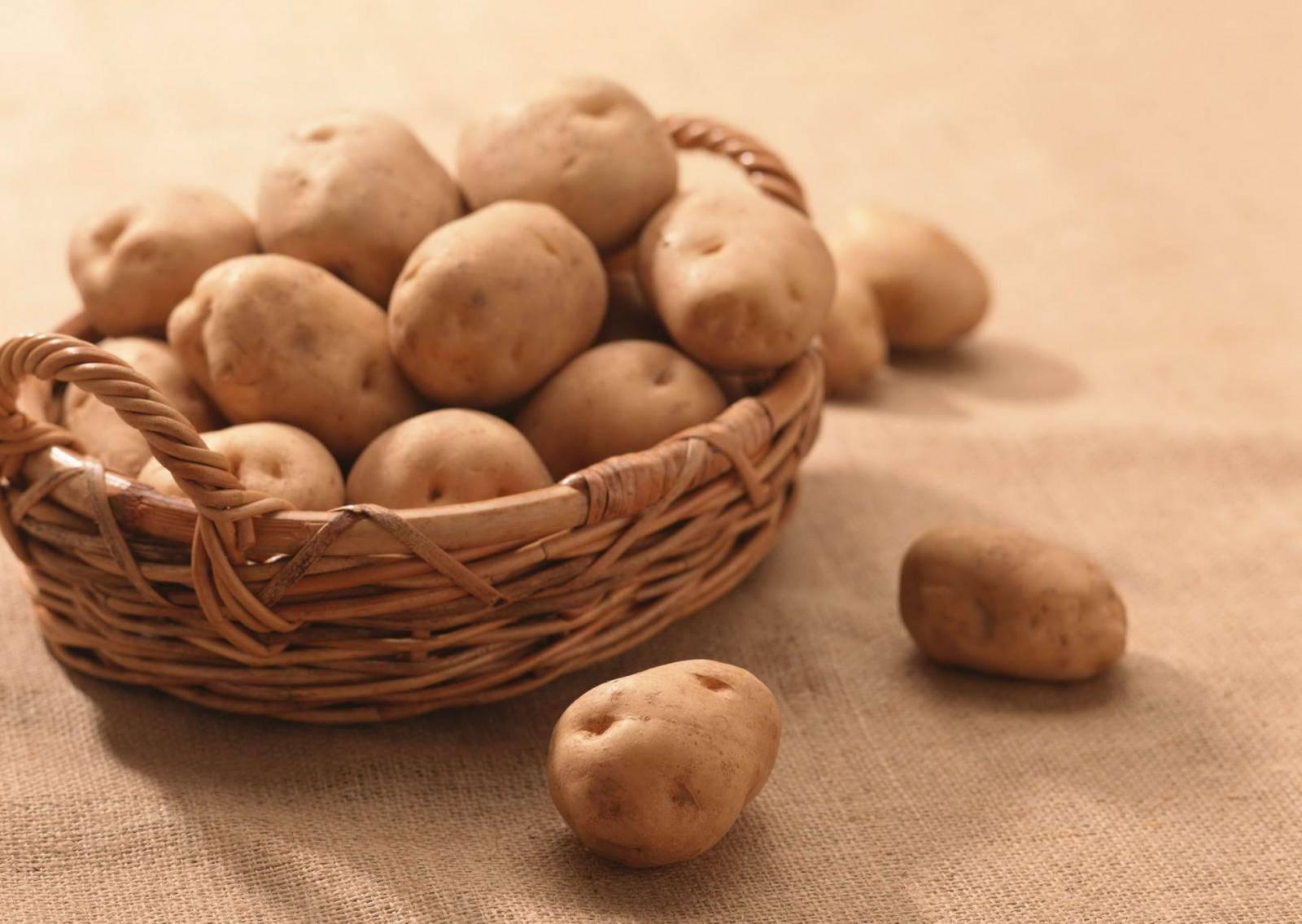 Выращивание картофеля по голландской технологии: описание способа, плюсы и минусы метода, а также правила посадки на даче и в домашних условиях