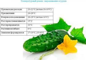 Огурец зозуля f1: описание и характеристика сорта, выращивание и уход
