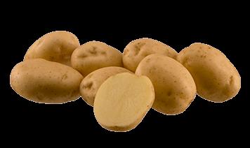 Сорт картофеля «ривьера»: характеристика, описание, урожайность, отзывы и фото