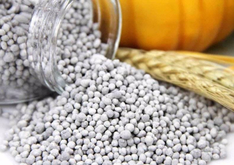 Нитроаммофоска (удобрение): применение для выращивания овощей