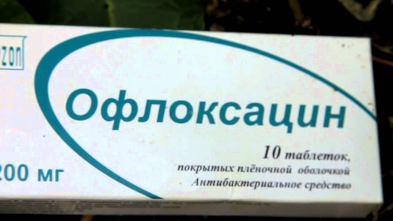 Бактериальный ожог груши: лечение антибиотиками, меры борьбы, профилактика