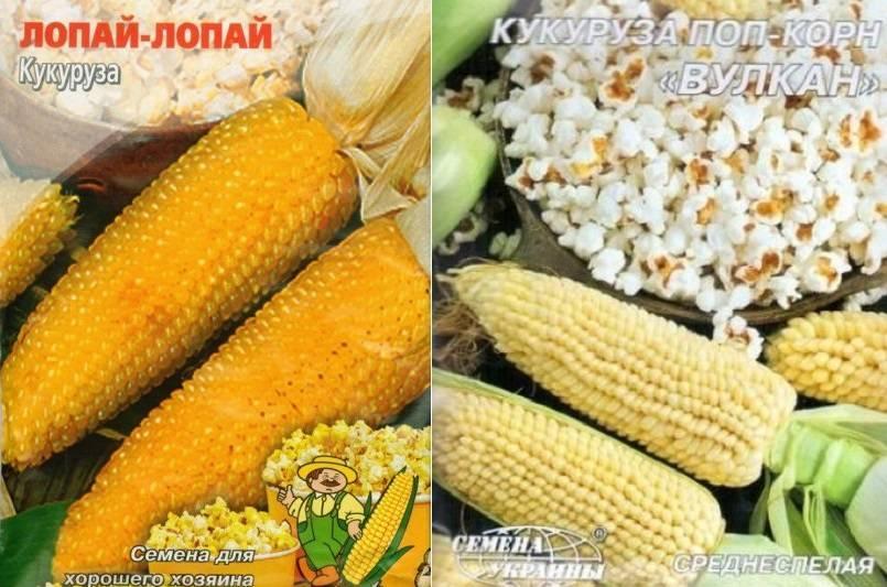 Как сделать попкорн из кукурузы в домашних условиях: как из свежего початка приготовить лакомство в микроволновке или пожарить на обычной сковородке?