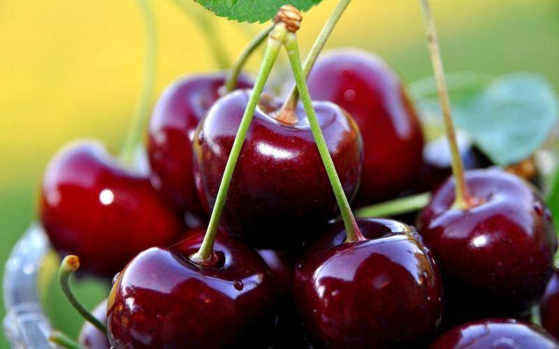 Черешня московская красная — описание сорта, фото, отзывы садоводов
