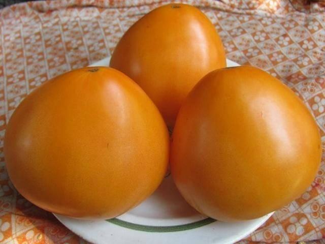 Помидоры, которые можно выращивать на всей территории рф —  сорт «бычье сердце оранжевое»