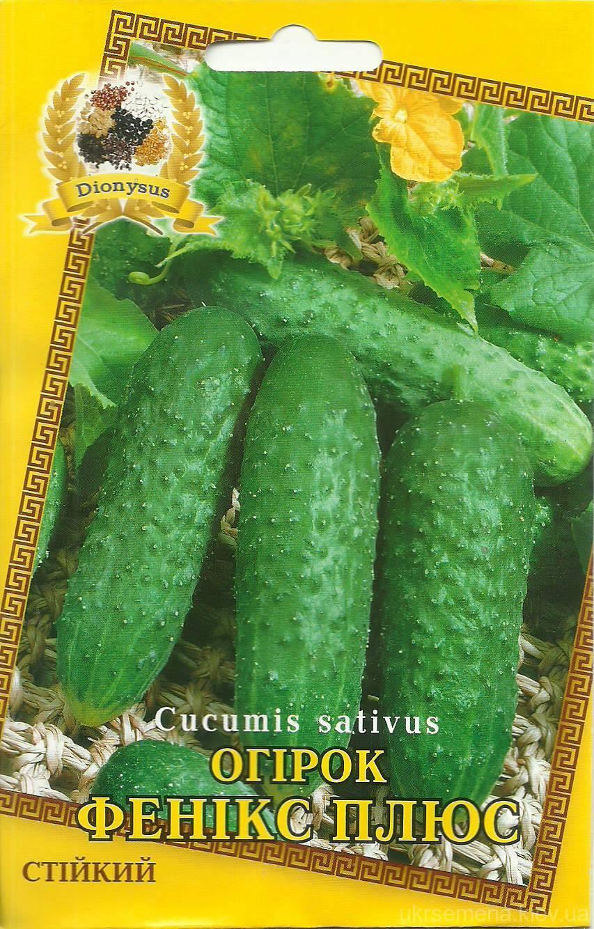 Характеристики сорта огурцов маринда f1 и советы по выращиванию
