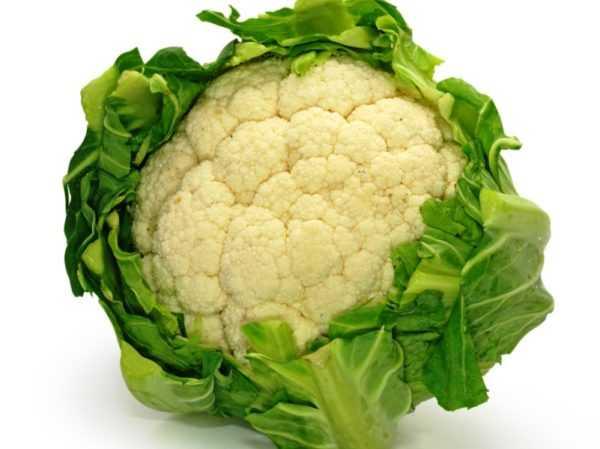Польза и вред цветной капусты для здоровья