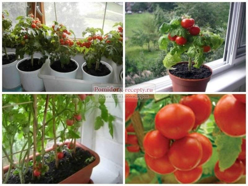 Как ухаживать за помидорами черри - сроки цветения, тонкости выращивания, плюсы и минусы выращивания