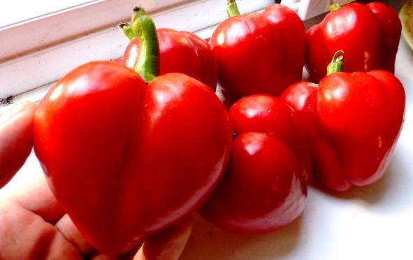 Разнообразие сортов толстостенного перца: выращивание и уход