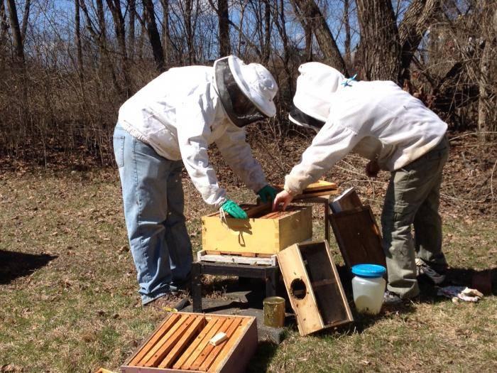 Как ухаживать за пчелами: для начинающих, правильно?