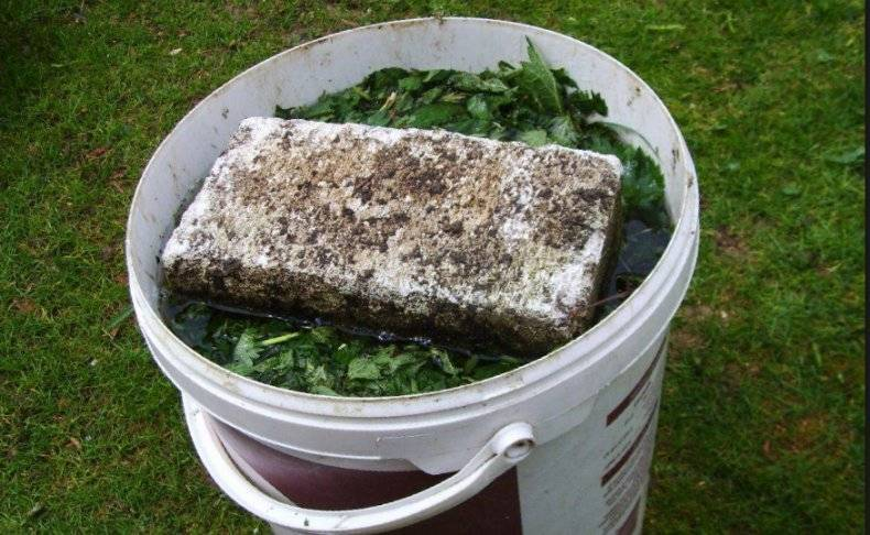 Удобрения для огурцов в теплице из поликарбоната: подготовка грунта (почвы) и чем подкормить овощ весной?