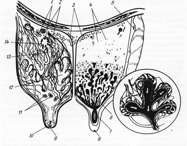 Как приучить корову к доильному аппарату (из опыта!)