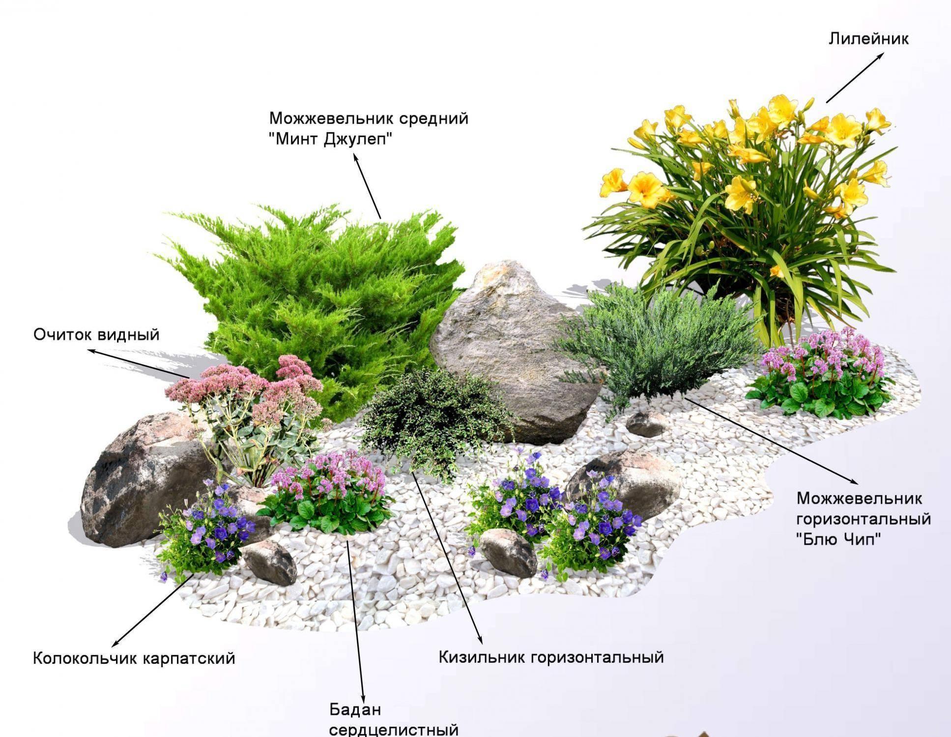 Клумбы с хвойными растениями фото и схемы