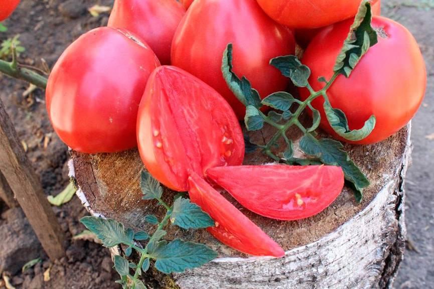 Описание сорта помидоров вельможа