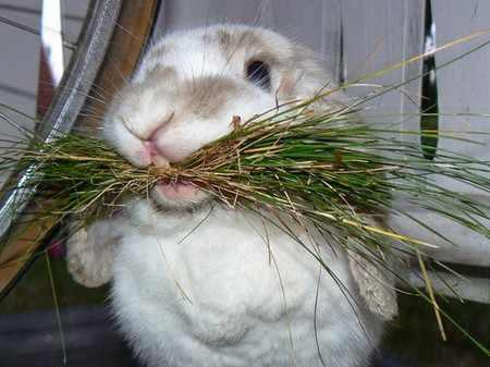 Как и чем кормить декоративного кролика в домашних условиях