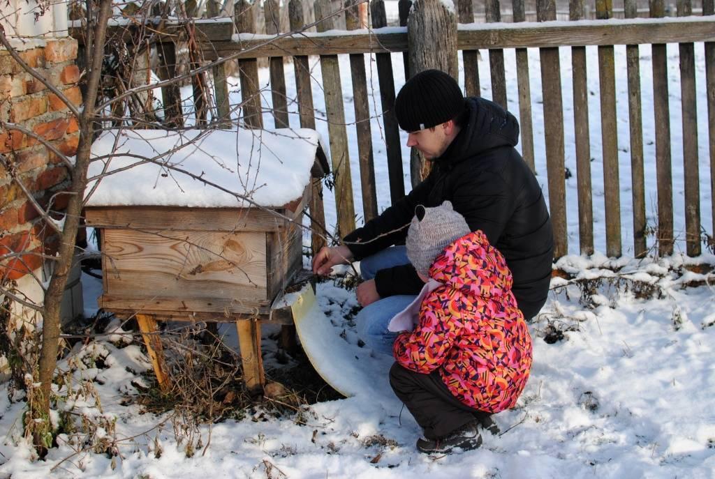 Сколько меда надо оставлять пчелам на зиму
