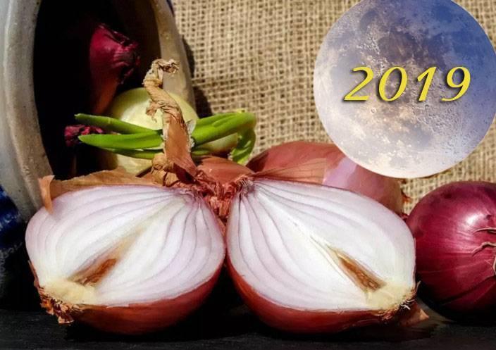 Посадка лука-шалота под зиму в октябре 2019 по лунному календарю: лучшие дни для посадки, сорта и технология