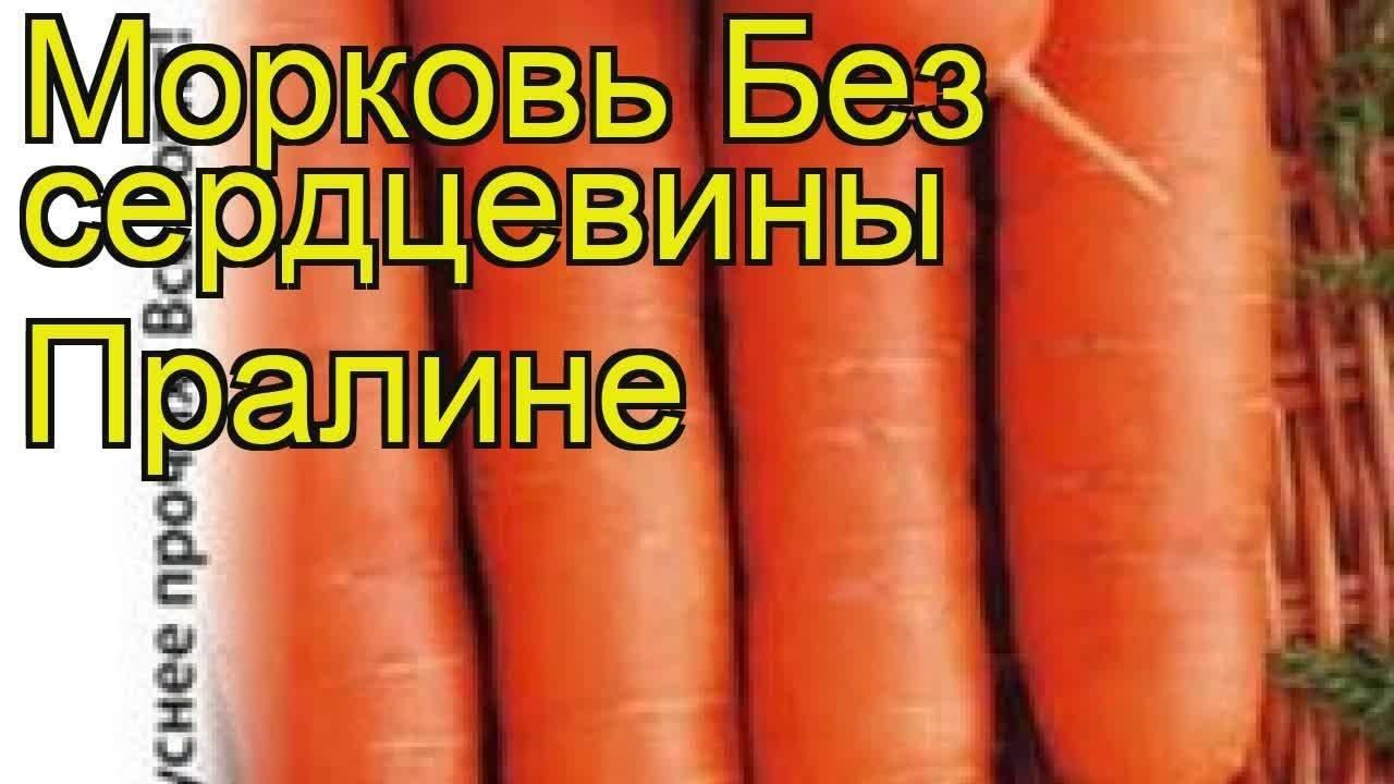 Выбираем сорта моркови