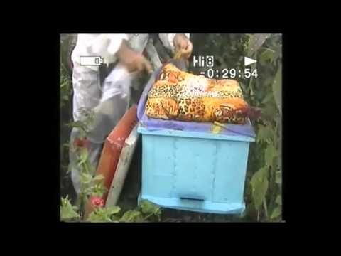 Бисанар для пчел