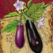 Описание сорта баклажана фиолетовое чудо, особенности выращивания и ухода