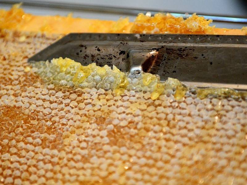 Пчелиный забрус: лечебные свойства, приготовление, применение польза