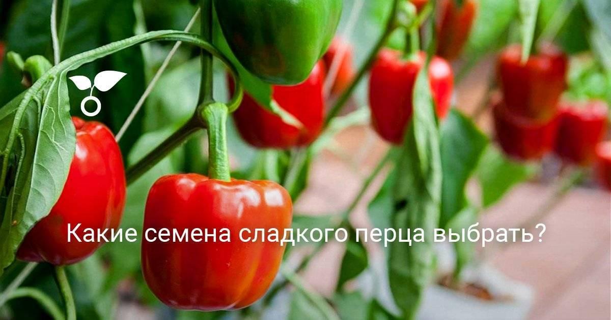 Лучшие сорта сладкого болгарского перца: описания, характеристики и фото
