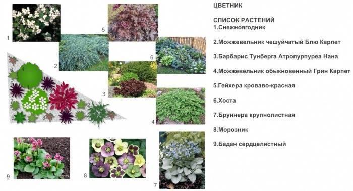 Создание миксбордеров своими руками с названиями растений