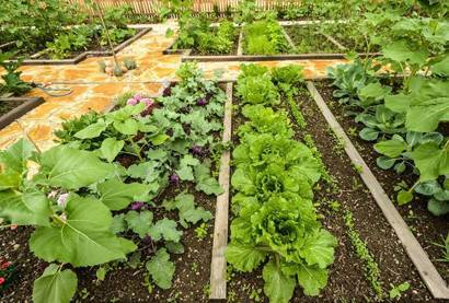 Как посадить морковь под зиму, чтобы получить богатый урожай уже в начале лета?