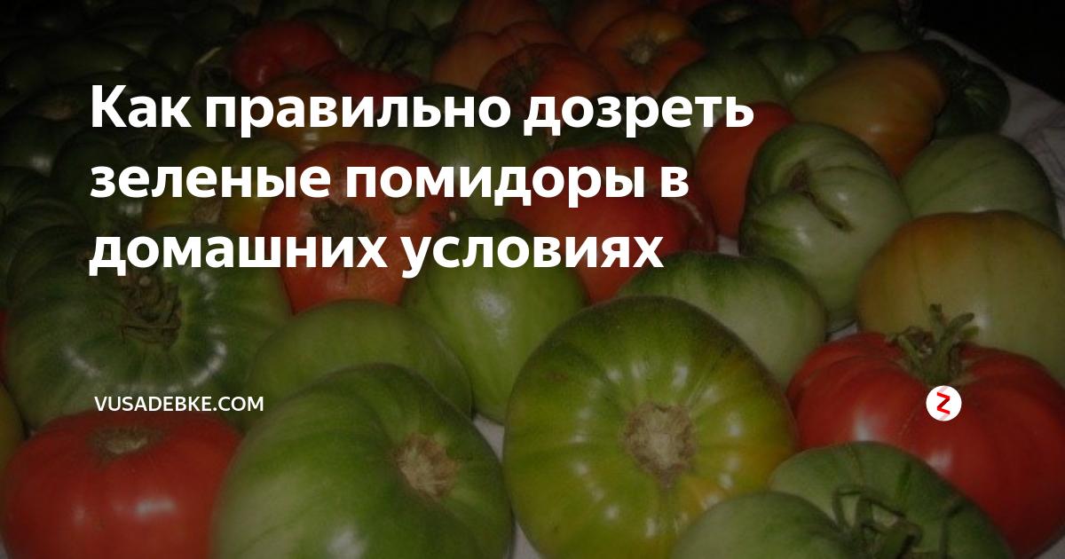 Как правильно хранить зелёные помидоры, чтобы они покраснели