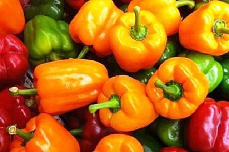 Перец здоровье: описание сорта, особенности выращивания
