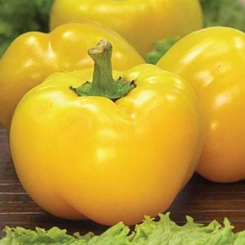 Сорта перца сладкого или болгарского для открытого грунта и для теплицы:  виды и названия, цвета и описания, фото
