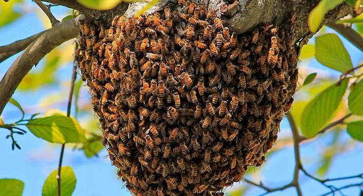Почему слетели пчелы из улья осенью