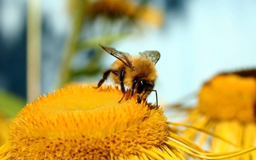 Август — особенности пчеловодства в конце лета