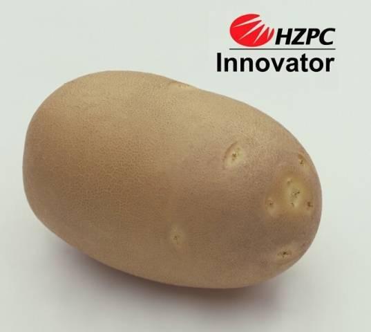 """Картофель """"свитанок киевский"""": описание сорта, подробная характеристика и фото картошки"""