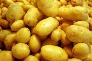 Картофель венета — идеальный сорт
