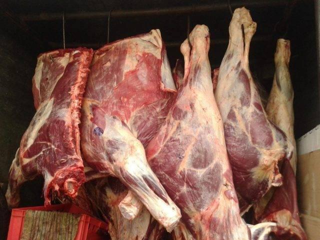 Выход свиного мяса от живого веса