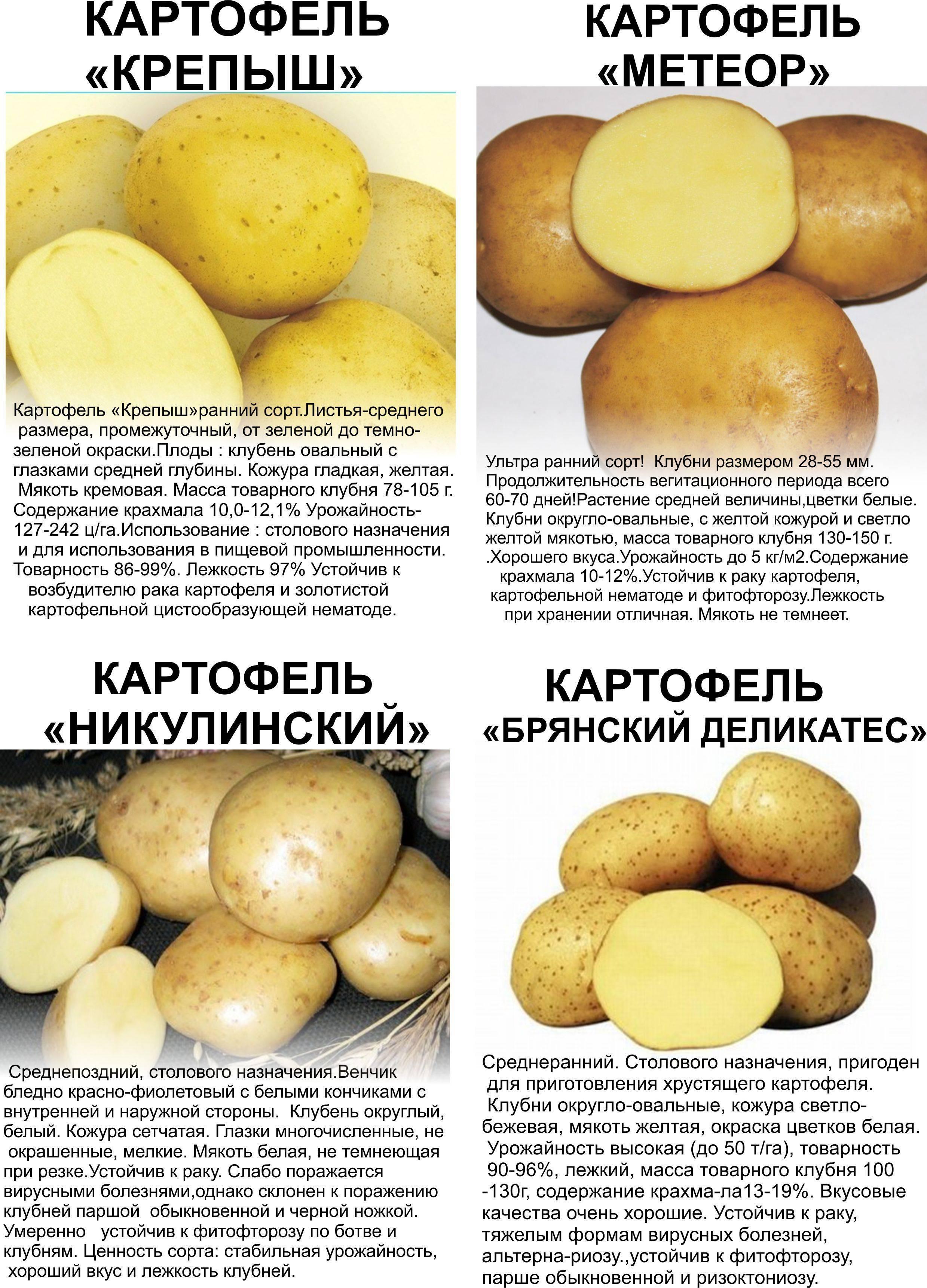 Картофель брянский деликатес: описание сорта, фото, отзывы
