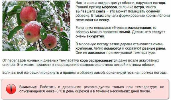 Хотите получить хороший урожай? научитесь правильно обрезать плодово-ягодные деревья
