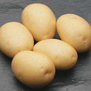 Фиолетовый сорт картофеля «гурман»: характеристика, описание, урожайность, отзывы и фото