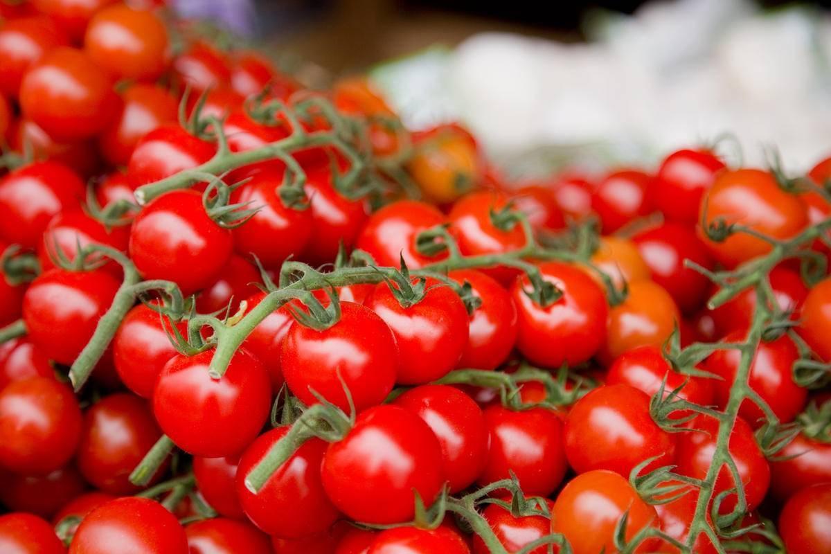 Сорт томата «желтая груша» голландской селекции: описание, характеристика, посев на рассаду, подкормка, урожайность, фото, видео и самые распространенные болезни томатов
