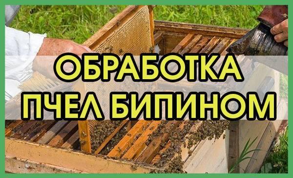 Осеняя обработка пчел бипином