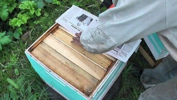 Осеннее объединение пчелиных семей
