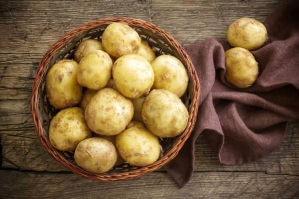 Картофель санте: описание и характеристики сорта