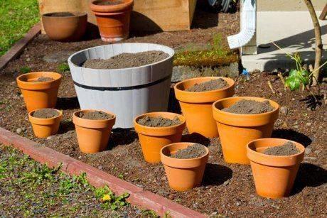 Как ухаживать за рассадой перца, чтобы она росла хорошо и была здоровой