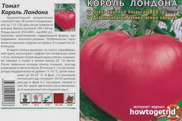 Фото, видео, отзывы, описание, характеристика, урожайность сорта томата «король сибири»