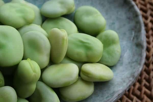 Описание сорта фасоли лима, особенности выращивания и ухода