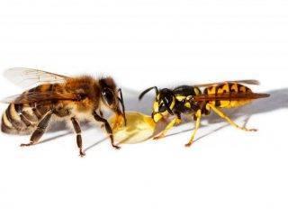 Читать книгу 750 ответов на самые важные вопросы по пчеловодству в.  королева : онлайн чтение - страница 2
