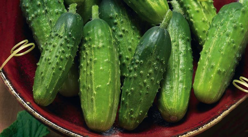 Уникальность томата дамский угодник и чем он привлекателен для огородников?